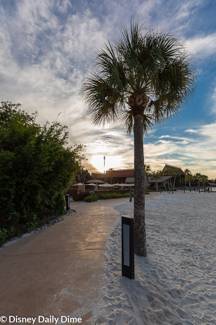Picture of a palm tree and beach around Disney's Polyensian Village Resort.